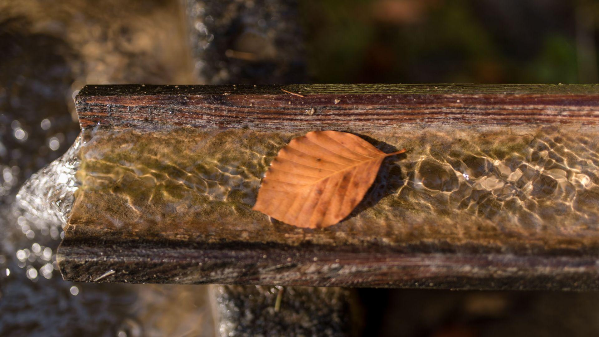 Wasser mit Herbstblatt