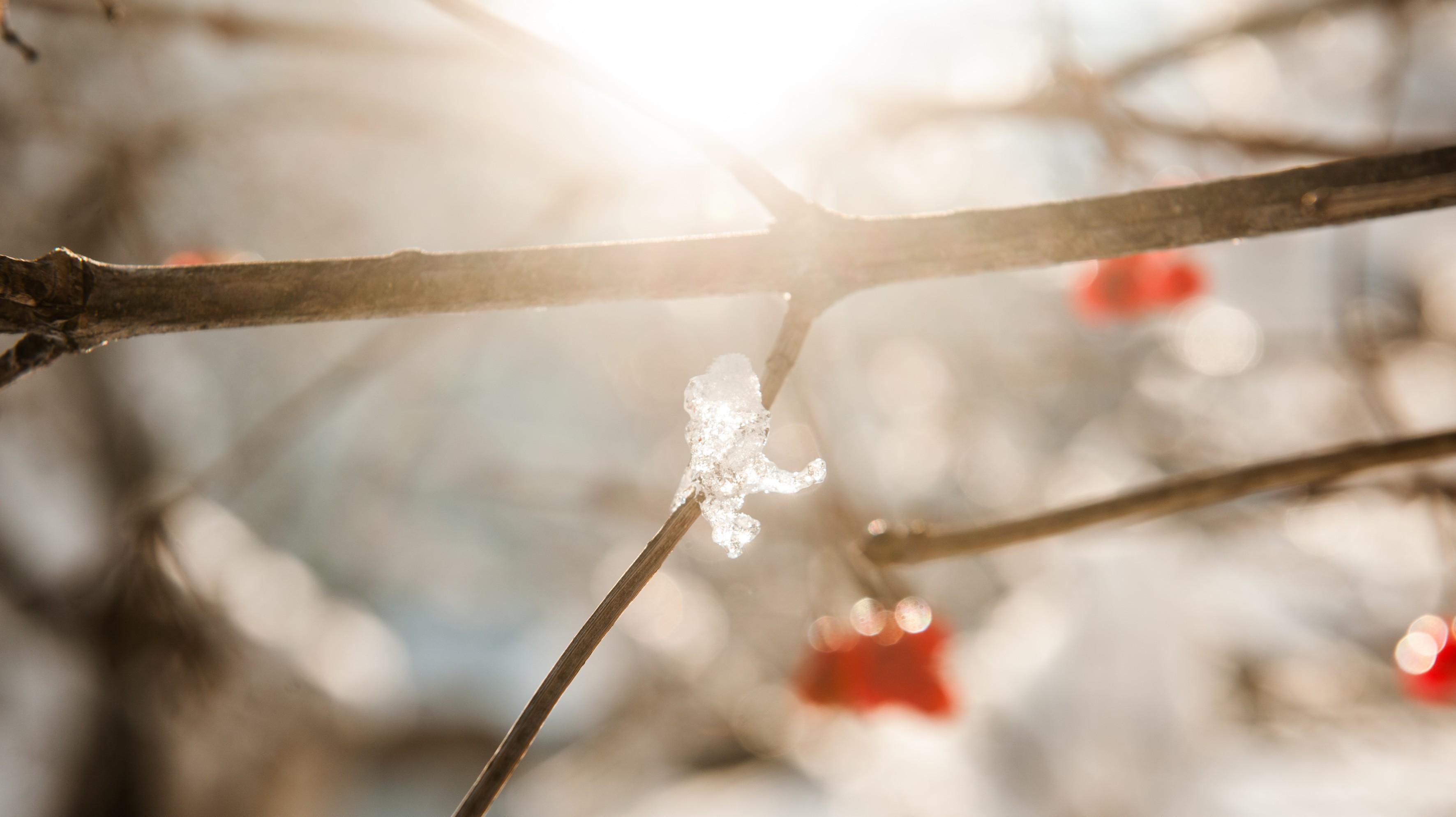 Beeren im Gegenlicht, Winter