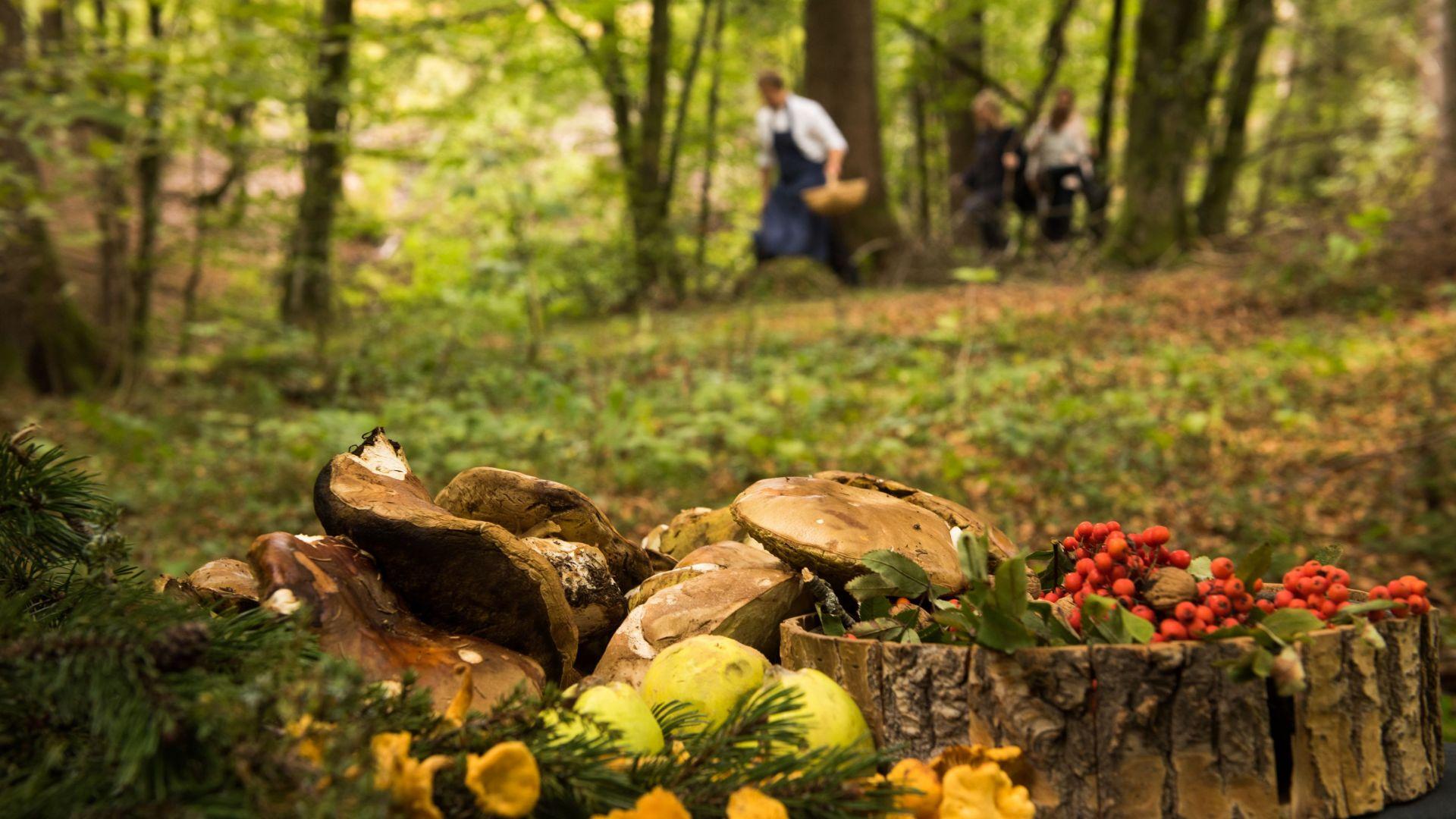 Lebensmittelsuche im Wald