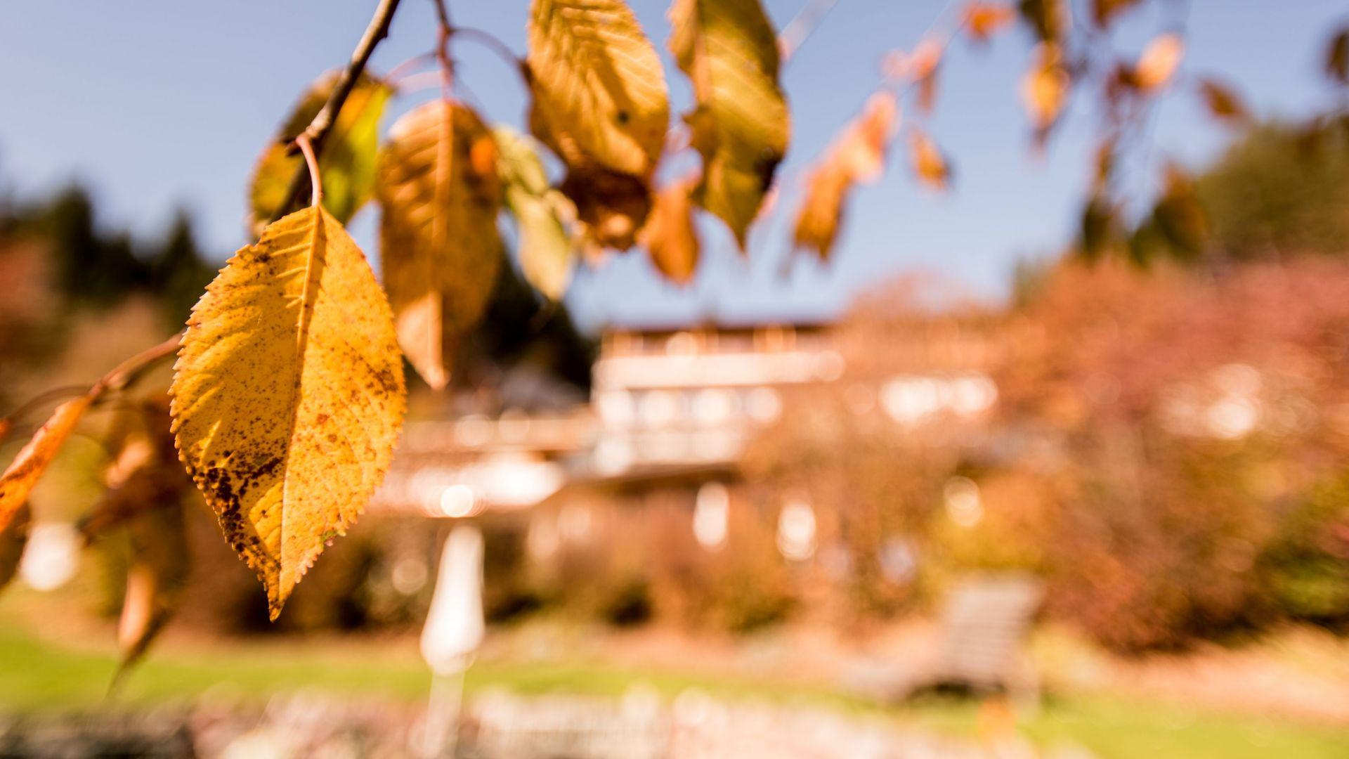 Daberer Herbst